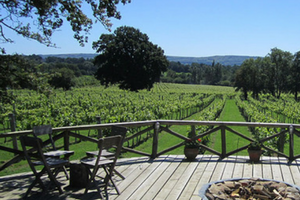 Nutbourne Winery - one of Vine Social's English winery partners.