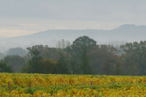 Ridgeview Winery - one of Vine Social's English winery partners.